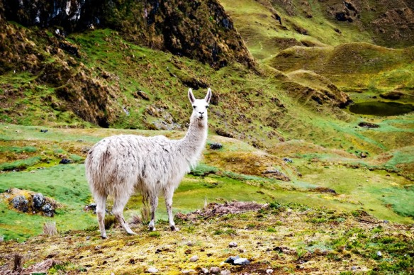 Thank you to Lynn Dao for this beautiful foto along the Lares route
