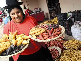 A woman at market holds a basket of mashua, on left, and oca on the right