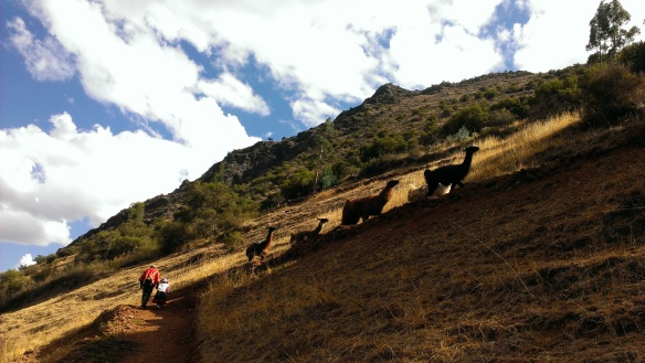 1-Miss M took hand, trekking with llamas, trekking with kids,  sacred valley family holiday