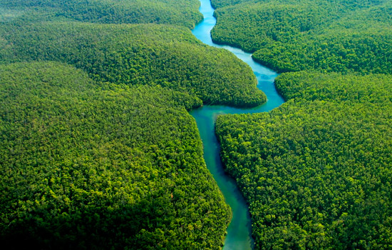 spr5d_banner_peru_amazon_river_trees.jpg